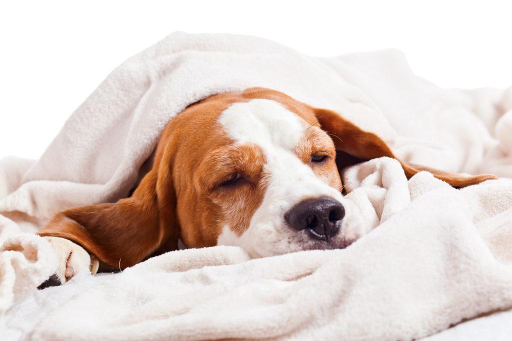 Сколько лет живут собаки с диабетом